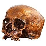 K99 Modelo de cráneo Humano de tamaño Natural - Decoración de réplica de cráneo Humano Bronce - 1: 1 Replica Realista Humano Humano Cráneo Head Modelo de Hueso Halloween Party Decoración del hogar