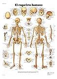 3B Scientific Póster Anatómico, el Esqueleto Humano